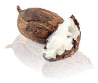 shea butter nut